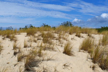 surf cours capbreton dune (1)